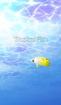 Tropical Fish 画像(1)